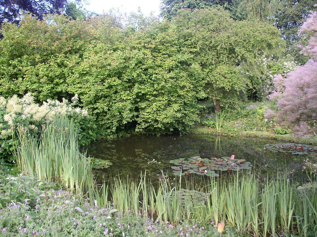 Wild Garden Pond 2019
